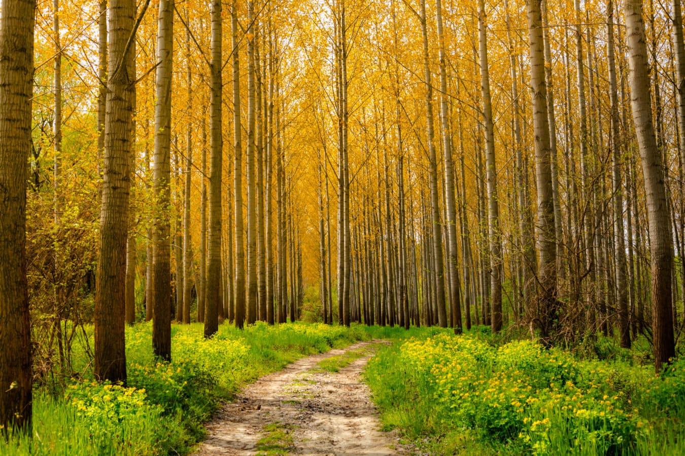 Lesnická infrastruktura – dotace až 90 %
